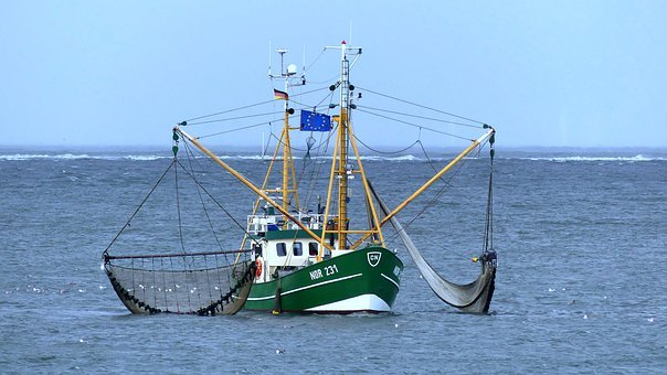 Cutter, Crabs, Sea, Shrimp, Fisherman, Fishing, Coast