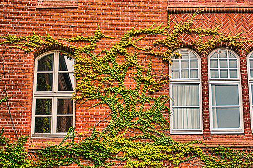 Facade, Make The Most Of, Window, Overgrown, Wall, Red