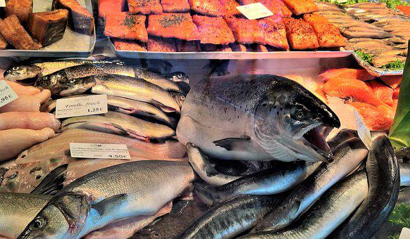 Fish, Fish Business, Window, Costs Incurred By
