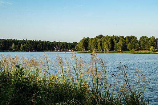 Nature, Lake, Landscape, Forest, View, Beautiful
