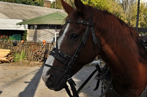 Horse, Drawn, Brown, Bridle, Yard, Portrait