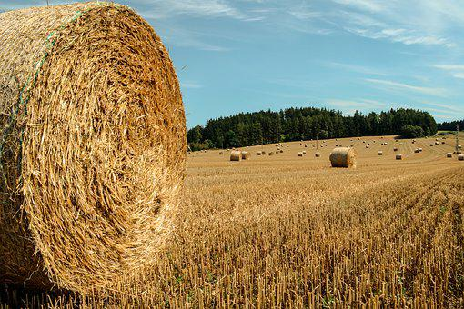 Agriculture, Field, Straw, Landscape, Farm, Countryside