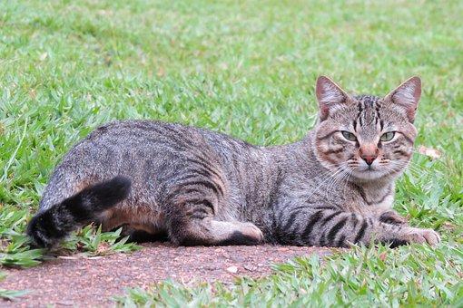 Cat, Feline, Domestic, Tamed, Kitten, Beautiful