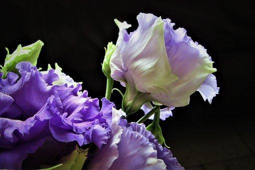 Flower, Lilac, Grow, Petals, Vegetable, Flowering