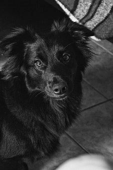 Animal, Dog, Black And White, Eyes, Focus, Camera