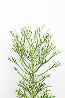 Green, Plant, Nature, Leaves, Garden, Botany, Photo