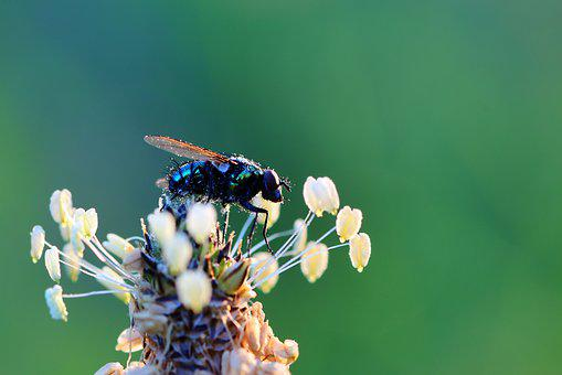 Fly, Close Up, Insect, Wing, Macro, Animal, Nature