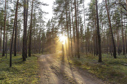 Journey, Forest, Beauty, Nature, Alone, Rays, Love