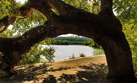 Mainau Island, Tree Stump, Lake View, Lake Constance