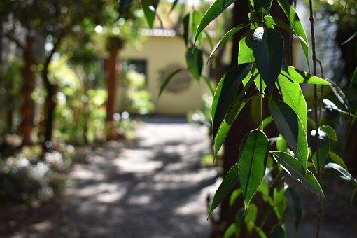 Leaves, Flying, Nature, Forest, Tree, Green, Landscape