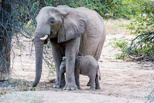 Elephant, Mother, Young Animal, Baby, Africa, Etosha