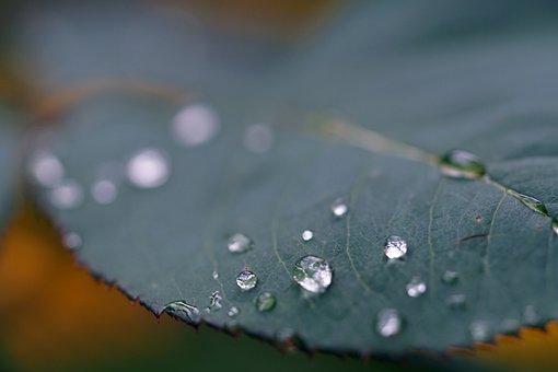 Drops, Leaf, Nature, Water, Macro, Plant, Dew