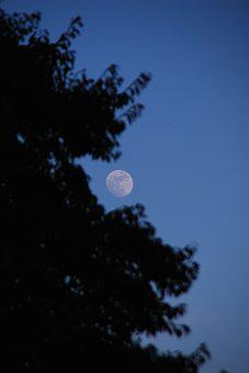 Moon, Sky, Blue, Tree, Nature, Landscape, Trees