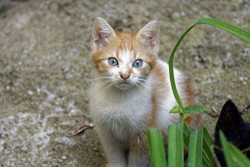 Cat, Pussy, Chicken, Small, Cute