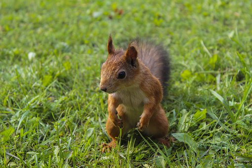 Squirrel, Nature, Park, Animal, Rodent, Forest, Tree