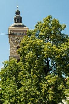 Czech, Budějovice, Budějice, Southern, Bohemia, Tree