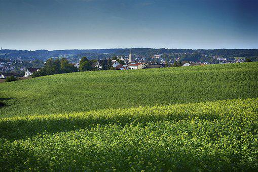 Landscape, Trees, Field, Oilseed Rape, Autumn
