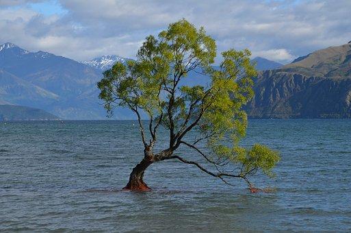 Wanaka Tree, New Zealand, Wanaka, Nature, Mountains