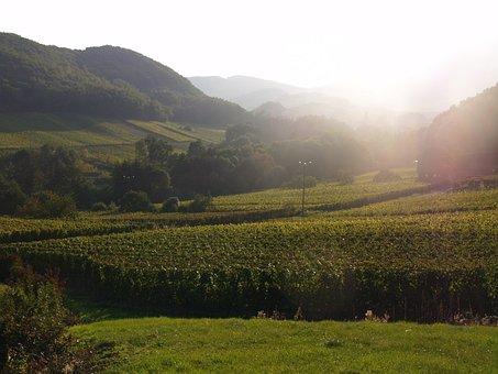 Vineyard, France, Wine, Grapes