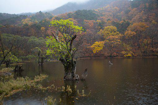 And Thu, Lake, The Main Production, Autumn, Nature