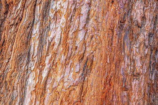 Bark, Tree Bark, Sequoia, Plant, Tree, Fibrous, Wood