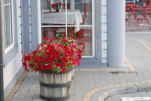 Petunias, Flowers, Summer, Bloom, Flowerpot, Red, Café