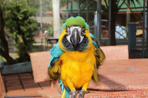 Rare Parrot, Cute Parakeet, Beautiful Macaw