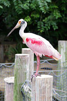 Bird, Zoo, Captivity, Pink, Animal, Feather, Colorful