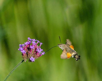 Butterfly, Forage, Tigist, Flower, Violet, Macro, Close