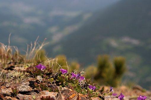 Flowers, Mountain, Valley, Austria, Tyrol, Alpine