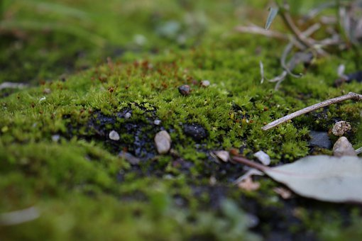 Leaf, Moss, Green, Forest, Nature, Autumn, Leaves