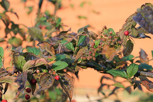 Autumn, Fruit, Autumn Motive