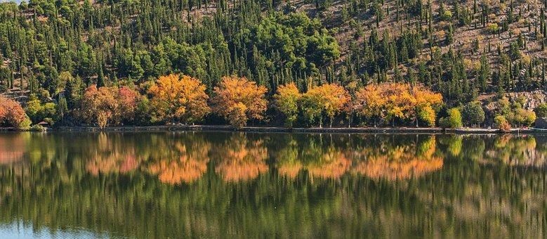 Trees, Lake, Autumn, Fall, Kastoria, Greece, Tree