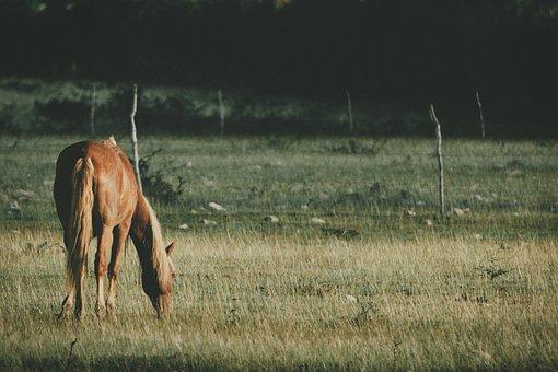 Horse, Grass, Field, Nature, Equine, Prado, Mane, Rural