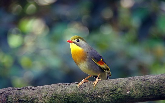 Bird, Zoo, Tropical, Nature, Pen, Beak, Colorful