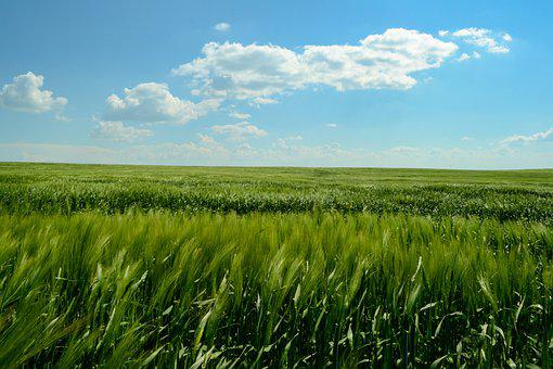 Meadow, Field, Heaven, Summer, Landscape, Outdoor