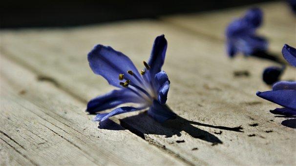 Sun, Blue, Flower, Vegetable, Flowers, Petals, Garden