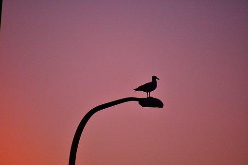 Seagull At Dawn, Bird, Landscape, Picturesque, Sunrise