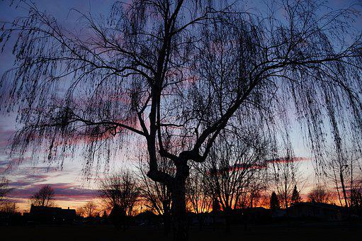 Sunset, Tree, Silhouette, Sky, Weeping Willow