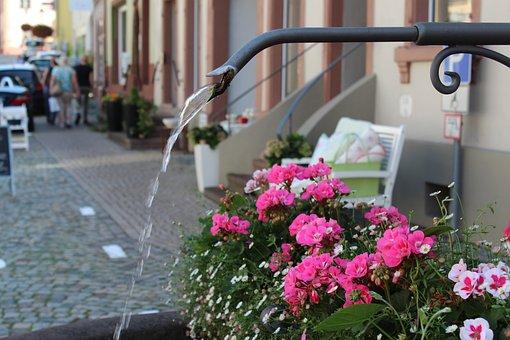 Village Fountain, Water Jet, Geranium, Flowers, Wet