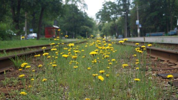 Wildflowers, Flowers, Nature, Wildflower, Floral