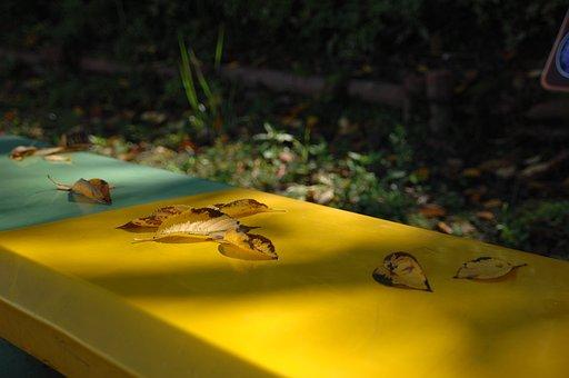 Autumn, Leaves, Sunshine, Yellow, Equability