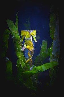 Environment, Water, Life, Natural, Animal, Sea