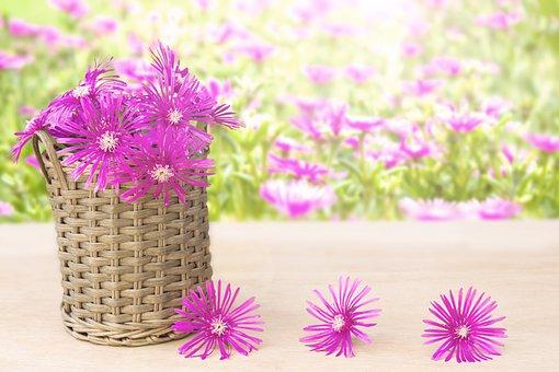 Flower, Pink, Nature, Plant, Beautiful, Blossom, Flora