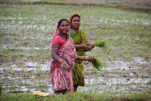 Two Women, Sari, Rice, Farmer