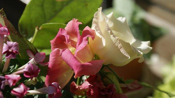 Flowers, Colors, Roses, Vegetable, Garden, Petals