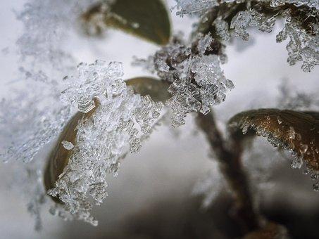 Frozen, Lingonberry, Ice, Winter, Hexagon, Crystal