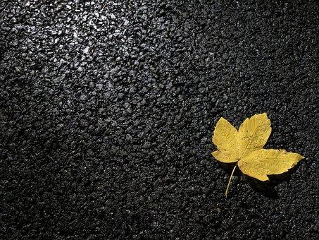 Leaf, Concrete, Leaves, Asphalt, Fall, Yellow, Autumn