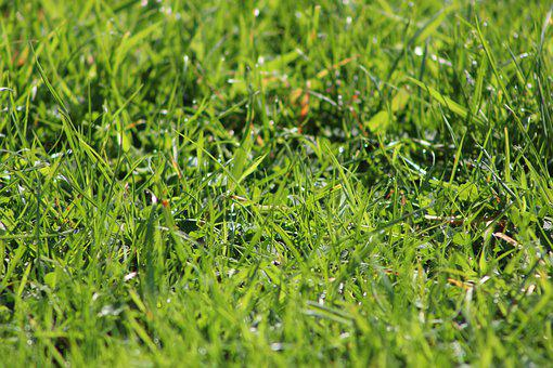Rush, Green, Grass, Meadow, Nature, Background, Plant