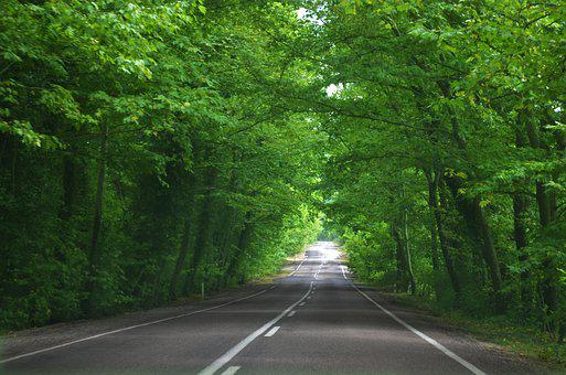 Way, Green, Road, Nature, Forest, Landscape, Spring